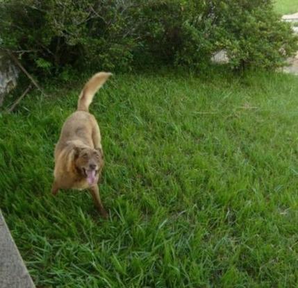 Slider brasil perro