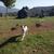 Slider thumb cam01763