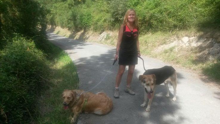 Slider foto con  perros