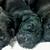 Slider thumb puppies1