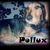 Slider_thumb_pollux