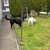 Slider_thumb_chiens_v_029