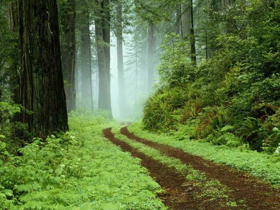 Slider forest