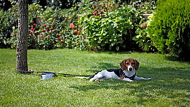 Slider dog in garden