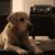 Slider thumb bildschirmfoto 2015 05 20 um 12.43.06