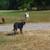 Slider thumb promenade chien paris social dog  2