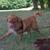 Slider thumb promenade chien paris social dog  15