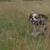 Slider thumb promenade chien paris social dog  12