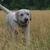 Slider thumb promenade chien paris social dog  14