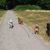 Slider thumb promenade chien paris social dog  3