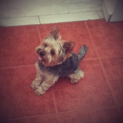 Cuido Perritos Pequeños En Fuengirola Gudogcom