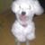 Slider_thumb_perros_019