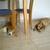 Slider_thumb_1st_time_ona_at_home_babysitting