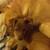 Slider thumb imag0334
