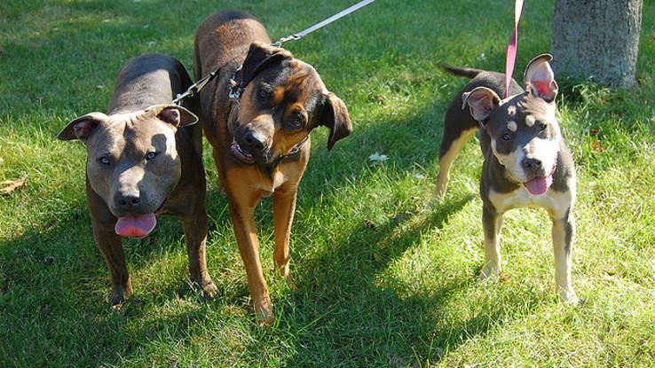 Slider activites promenade chien