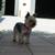Slider_thumb_budog-3