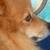Slider_thumb_budog-5