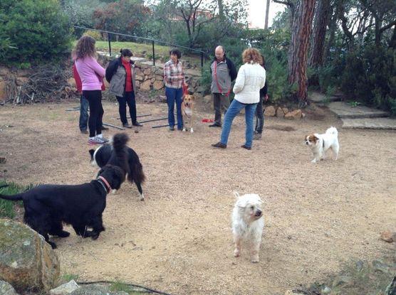 Slider_nosotors_trabajando_y_los_perros_disfrutando_