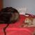 Slider thumb mao y drako durmiendo en cama