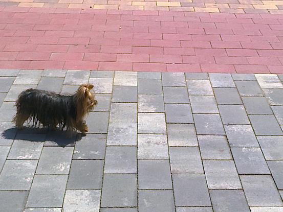 Slider paseo