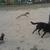 Slider thumb drako en parque de perros  gamo