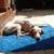 Slider thumb drako duerme en alfombra azul